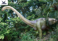 18 Meters Giant Realistic Dinosaur Models , Life Size Farm Animal Models